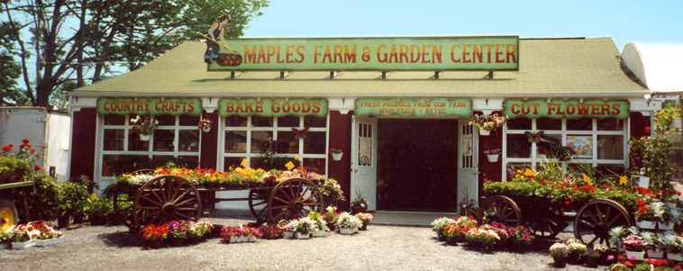 Historical photo of Maples Farm